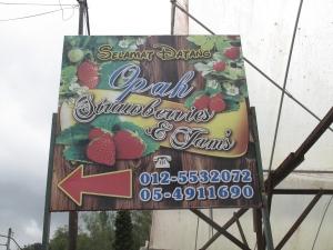 opah pun ada kebun strawberry di Cameron Highland